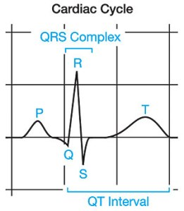 The time between onset of electrical activation of the ventricles (Q) and the depolarization or reset of the ventricles (T) is called the QT interval. You can be born with a prolonged QT interval or it can become prolonged due to certain conditions. Prolonged QT intervals increase risk of sudden death